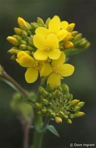 mustard-seed-faith-2